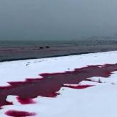 Каспий жағалауындағы су қызарып кетті