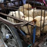 Қытайдың Шэньчжэнь қаласында ит пен мысық жеуге тыйым салынды