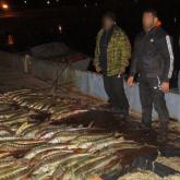 Каспий теңізінде заңсыз бекіре аулаған 98 адам ұсталды – ҰҚК