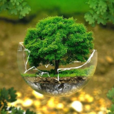 Қоғам белсенділері 2021 жылды «Экология жылы» деп жариялауды ұсынды