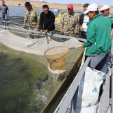 Қазақстанда балық өнімінің көлеңкелі айналымы 40 млрд теңгеге жетті – Экология министрі