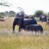 Намибия билігі пілдерді аукционға қойып сата бастады