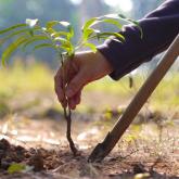 Алдағы 5 жылда елдімекендерге 15 млн ағаш отырғызылады