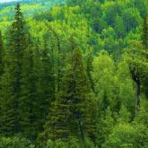 Қазақстанда орман қоры аумағы 188 мың гектарға көбейді