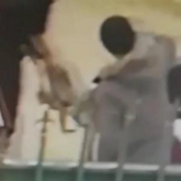 Ақтауда өлген итті ветеринарлық емхананың алдына тастап кеткен