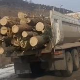 Алматыда бөгет құрылысы кезінде 4 мыңнан астам ағаш заңсыз кесілген