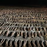 БҚО-да браконьерлерден 800-ден астам киік мүйізі тәркіленді