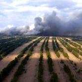 «Ертіс орманы» резерватындағы өрттің аумағы шамамен 1000 гектарды құрады
