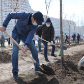 «Nur Otan» 2 млрд ағаш отырғызу міндетін қойып отыр – Байбек