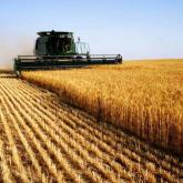 Қазір шетелдік жеті кәсіпорын 74,4 мың гектар ауыл шаруашылығы жерін жалға алып отыр