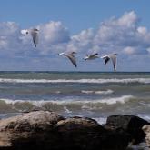 «Орны толмас экологиялық апатқа ұшыратуы мүмкін» - депутат Каспий акваториясында арналар қазу туралы