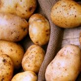 Сауда министрі картоп бағасының не себепті қымбаттағанын түсіндірді