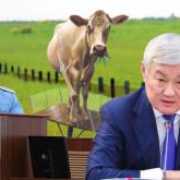 «Бір бас малы болмаса да гектарлап жер алған»: Жамбыл облысының әкімдері жерді оңды-солды мақсатсыз үлестірген