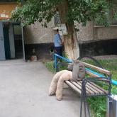 Павлодар облысында айуандықпен өлтірілген отбасы туралы тың деректер айтылды