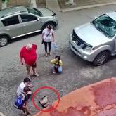 Қарағандыда балалар буаз мысықты тоғызыншы қабаттан лақтырып жіберген