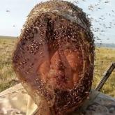 ШҚО-ның бірнеше ауылында масаның көптігінен халық малға жем-шөп жинай алмай отыр
