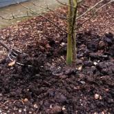 Алматыда күзде 300 мың ағаш отырғызылады