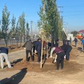 Елордада коммуналдық сенбілік кезінде екі мыңнан астам ағаш отырғызылды