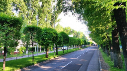 Алматыдағы әрбір ағаштың төлқұжаты болады – Сағынтаев