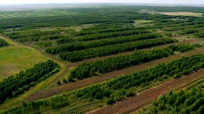 Қазақстанда 2 млрд ағаш отырғызылады: тұрғындар бұл процесті интерактивті карта арқылы бақылайды