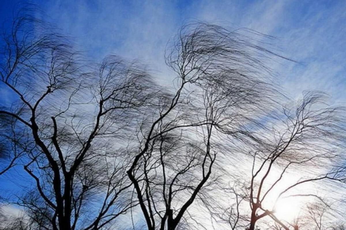Сильный ветер слева картинка
